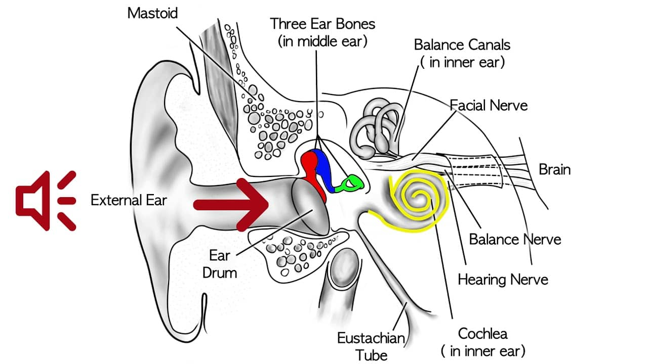 conductive hearing loss causes